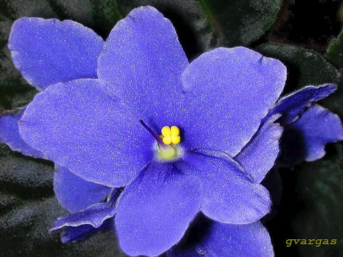 Blue-Violet Experience